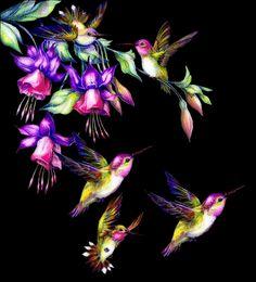 Aves 1 - Amigos de Gabito - Gabitos