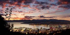 Wellington city at dawn. Wellington, New Zealand. Wellington City, Wellington New Zealand, Voyager Loin, Yangon, Pictures Of The Week, Bangkok Thailand, Best Cities, Capital City, Adventure Travel