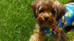 Animaux en vacances ;-) Voici Léo!