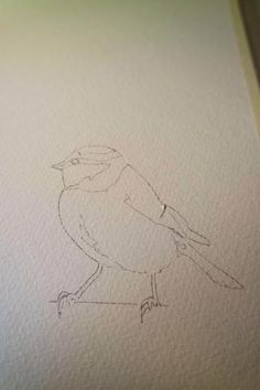 How to paint a blue tit in 5 easy steps..... – watercolours by rachel