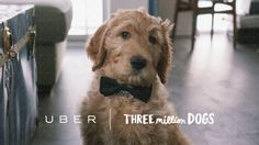 """Citing National Adopt-A-Shelter Pet Day, Uber Canada partnered with 3MillionDogs to serve """"puppy play dates"""" to offices in Toronto, Ottawa, Montreal and Edmonton."""