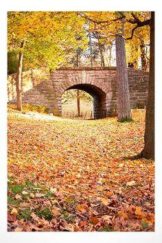 Delaware Park, Buffalo, New York. Gorgeous park.