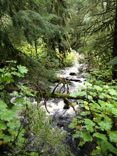 Auke Creek in Alaska