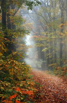 Discovered by Fairydust. Find images and videos about nature, autumn and fall on We Heart It - the app to get lost in what you love. Fall Pictures, Nature Pictures, Terre Nature, Beautiful World, Beautiful Places, Foto Nature, Forest Path, Autumn Forest, Autumn Scenes