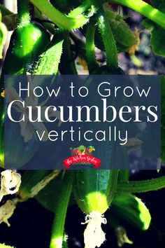 Grow up, not out. Save space in your garden by taking cucumbers up! This not only saves space, but helps keep cucumbers off of the ground where pests may live. #cucumbers #verticalgardening #gardening