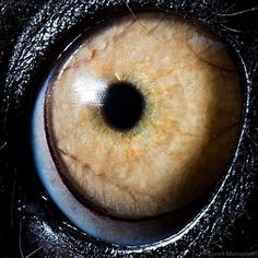 Award Winning Macro Photography of Animals and Human Eye