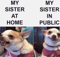 Funny Friday Memes, Funny Dog Memes, 9gag Funny, Friday Humor, Crazy Funny Memes, Really Funny Memes, Funny Laugh, Funny Relatable Memes, Funny Dogs