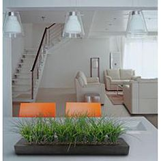 @Overstock - These bundles of grass in its contemporary black rectangle planter add life and texture to any space. As a centerpiece in a dining room table or conference room, this flowing grass arrangement will finish any room perfectly.http://www.overstock.com/Home-Garden/Laura-Ashley-Green-Grass-in-Contemporary-Wood-Planter/6031220/product.html?CID=214117 $58.99