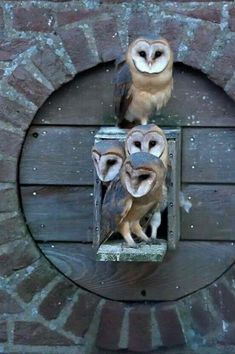 """The one on the top. """"This was my box, it's an 'owl' box, not a hostel"""" ! Owl Photos, Owl Pictures, Beautiful Owl, Animals Beautiful, Beautiful Family, Owl Bird, Pet Birds, Animals And Pets, Cute Animals"""