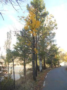 Distintos árboles en otoño junto a la carretera entre el casco urbano de El Tiemblo y la Casa del Parque de las Iruelas.