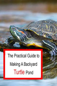 The Practical Guide to Making A Backyard Turtle Pond Red Ear Turtle, Turtle Cage, Turtle Pond, Pet Turtle, Aquatic Turtle Habitat, Aquatic Turtles, Small Backyard Ponds, Outdoor Ponds, Reptiles