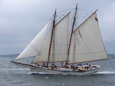 """American Eagle"", Sailing boat -  7 Août 2006 (170)b"