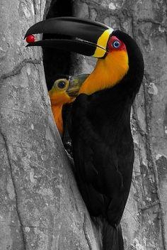 Such vibrate Toucan colors