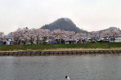 Kirschblütenfest in Kakunodate #akita #japan