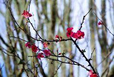 Plum blossom by Nina  Lin on 500px