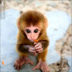 Portrait | monkey, cub, food - I'd like to give you this flower...