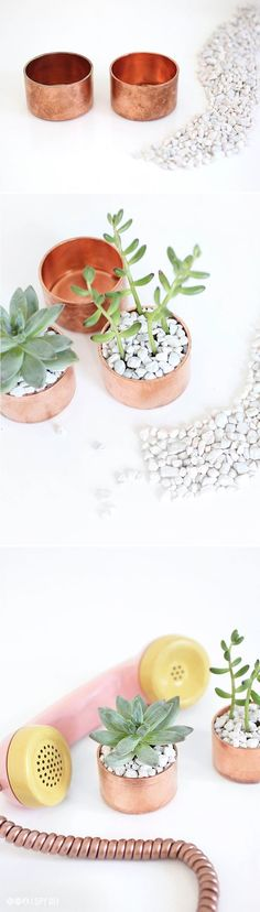 What you need:  2″ Copper cap Succulents White gravel  What you do:  Simply plant the succulent in a copper cap Cover the dirt with white pebbles Done!