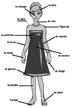73 best french vocab parts of body images in 2017 teaching french learn french french. Black Bedroom Furniture Sets. Home Design Ideas