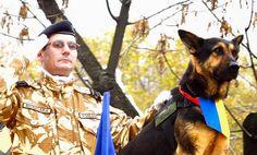 Zinnaida : Max câinele erou German Shepherd Dogs, Beast, Babies, Friends, Amigos, Babys, Baby, Infants, Boyfriends