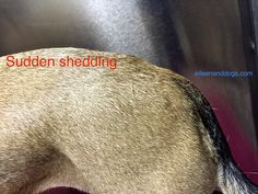 New photo added to my dog stress photos collection. I make high res versions available to anyone who wants to use them for educational purposes. Dog Stress, Dog Body Language, Facial Expressions, Dog Behavior, Dog Training, Pet Dogs, Articles, Photos, Collection