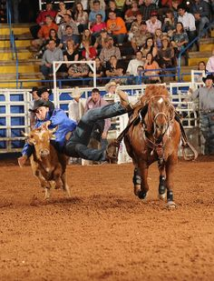 Star of Texas Fair and Rodeo's steer wrestling event at Rodeo Austin: March 1-16, 2014. #Texas #rodeo #farmcredit #steerwrestling