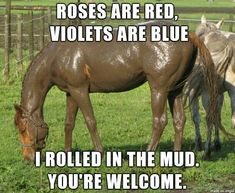 funny horse memes - funny horse memes - funny horse memes hilarious - funny horse memes equestrian - funny horse memes videos - funny horse memes humor - funny horse memes so true - funny horse memes western - funny horse memes jokes Funny Horse Memes, Funny Horse Pictures, Funny Horses, Funny Animal Jokes, Cute Horses, Pretty Horses, Horse Love, Cute Funny Animals, Funny Memes