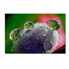 Pixie Easter Eggs by Steve Wall Photographic Print Gallery Wrapped on Canvas