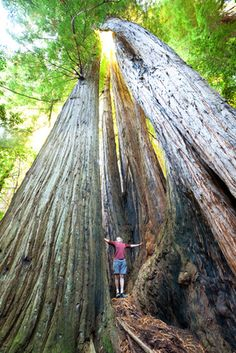 The Best Bets for a California Camping Road Trip with Kids