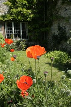 Cottage in village with poppies (Amberley)
