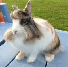 Check it out! A bunny with attitude #janinejansen #animals #hairstyles #cute