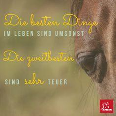 Pferdesprüche & Vielseitigkeit-emma-pferdefuttershop.de (12)