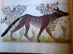 """""""Great Ages of Man: Early Islam"""", by Desmond Stewart, where you can find the pictures.  """"The Wolf."""" Folio from a Manafi' al-Hayawan of Ibn Bakhtishu', c. 1297. Iran."""