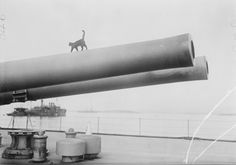 Ship's cat strutting along the barrel of a 15-inch gun on the deck of the HMS Queen Elizabeth. Gallipoli Peninsula, 1915.  ~~  These Are the Brave and Fluffy Cats Who Served in World War I  #vintage #cats