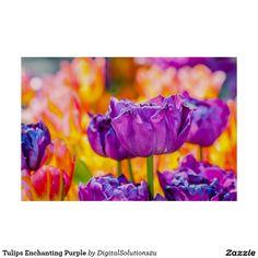 Tulips Enchanting Purple Poster