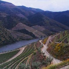 Overwhelmed as usual by magnificent landscapes of The Douro valley. #douro #quintadacabreira #crasto #festivaldovinhododourosuperior #winelover by mestrandreh