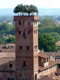 Seven full grown oaks trees atop the 14 story, about 44 metres high, Tower of Guinigis in Lucca, Italy are a strange sight and a great tourist attraction.  The tower was built in mid fourteenth century by the Guinigis, a rich merchant family of the town.