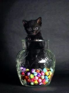 Looks like my cat when she was a kitty