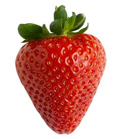 About Basic Bonsai Styles Strawberry Png, Strawberry Pretzel, Vegetable Pictures, Food Png, Fruit Photography, Fruit Art, Realistic Drawings, Aquaponics, Kombucha