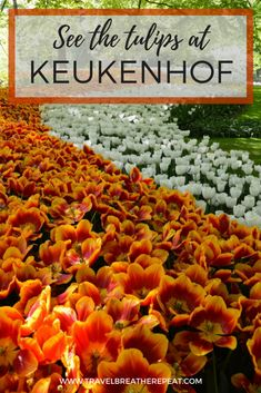 Inspiration and tips for going to visit the Keukenhof gardens in the Netherlands