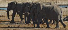 elephants hearing to waterhole - Google 検索