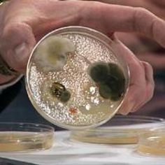 Growing Bacteria in Petri Dishes | Experiments | Steve Spangler Science Lakeshore Learning sells petri dishes, if you'd like to do this activity!