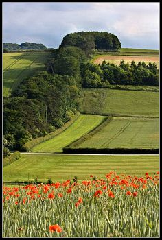 The rolling hills of the Marlborough Downs, Wiltshire