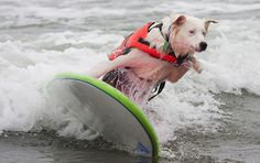 Surfer Dogs!