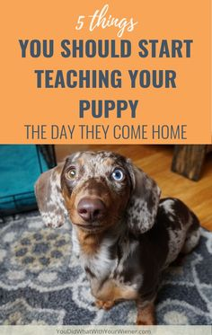 Training your puppy is all about building your relationship with your dog as well as establishing boundaries. Be firm yet consistent and you'll see outstanding results in your dog training adventures. Puppies Tips, Best Puppies, Dogs And Puppies, Pet Dogs, Wiener Dogs, Puppy Training Tips, Training Your Dog, Potty Training, Training Classes