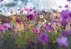Slik lager du din egen blomstereng – viivilla.no
