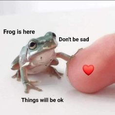 wholesome memes about friendship ~ wholesome memes - wholesome memes love - wholesome memes about friendship - wholesome memes relationship - wholesome memes love boyfriend - wholesome memes crush - wholesome memes boyfriend - wholesome memes friends Response Memes, Cute Love Memes, Love You Memes, Pretty Meme, Cute Frogs, Mood Pics, Les Sentiments, Cute Little Animals, Stupid Funny Memes