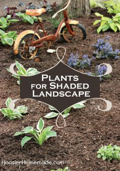 Finding plants that grow well in shade can be tricky – find out the best ones to plant!