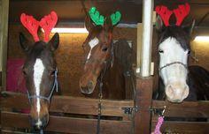 three reindeer horses