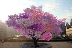 Essa árvore pode dar 40 diferentes tipos de fruta