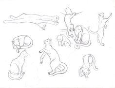 Cat study sketches part 1 by sapphire-blackrose.deviantart.com on @deviantART